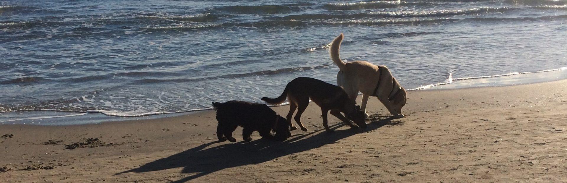 Educateur Comportementementaliste Canin à Domicile – Diplômé d'Etat